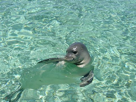Hawaii State Animal
