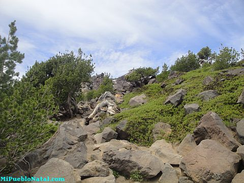 Mount Mcloughlin Vegetation
