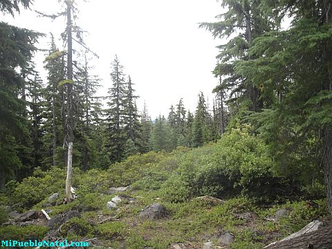 Mount Mcloughlin Vegetation