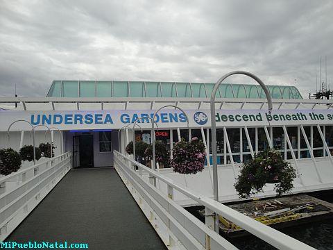 Newport Undersea Gardens