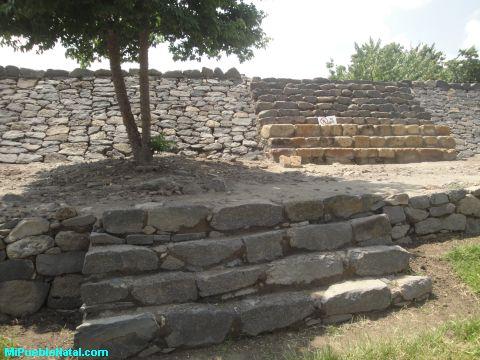 Arbol en la Piramid