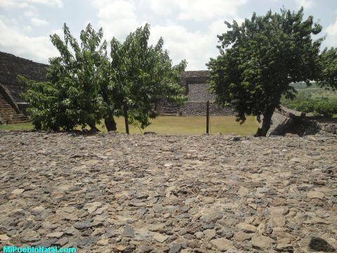 Arboles en la Plaza de las Piramide