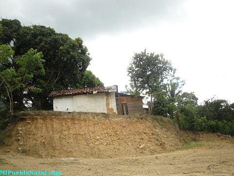 Taujica Colon