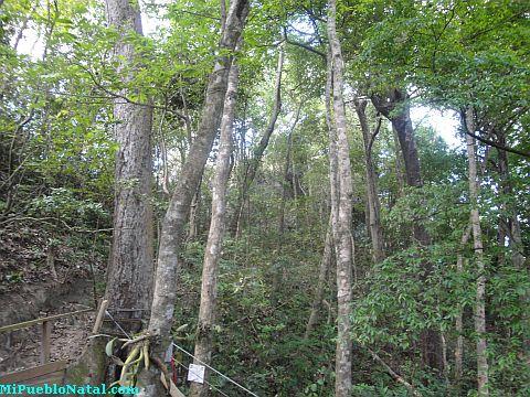 roatan canopy tour