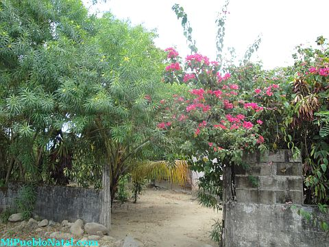 Fotos de Taujica