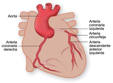 Arterias del Corazon